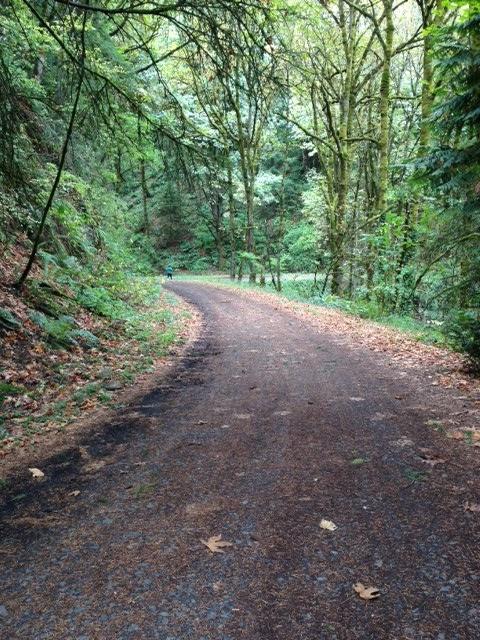 WildwoodTrail2