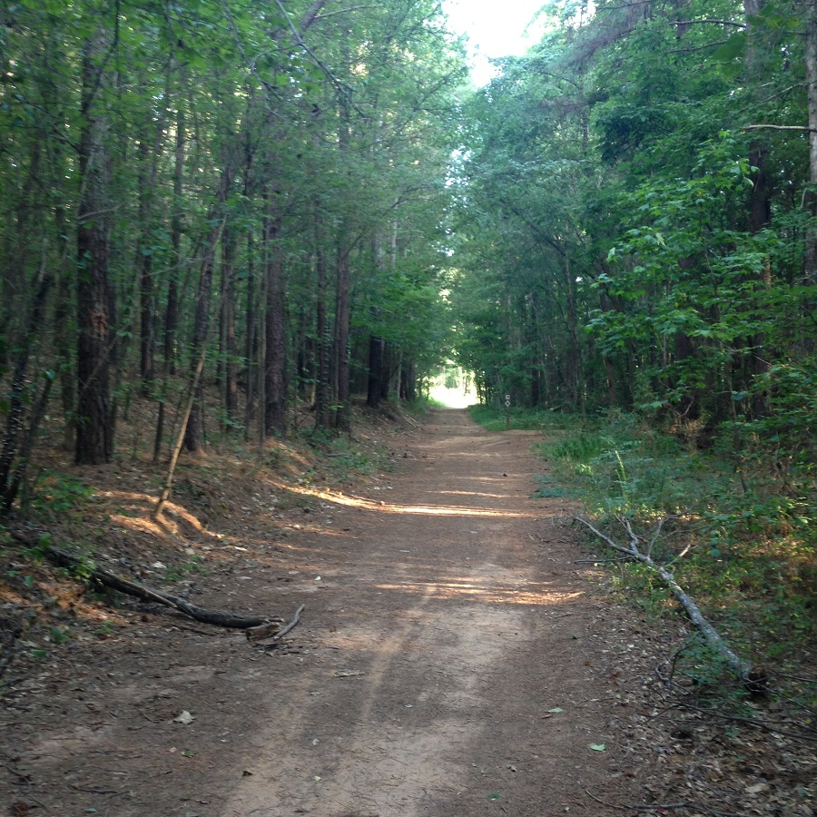 trail running, life lately