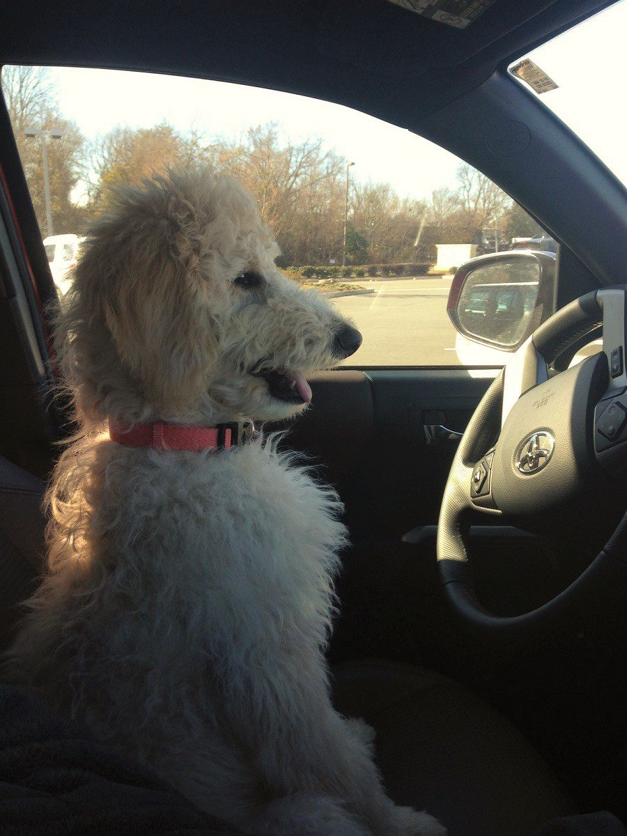 tater copilot