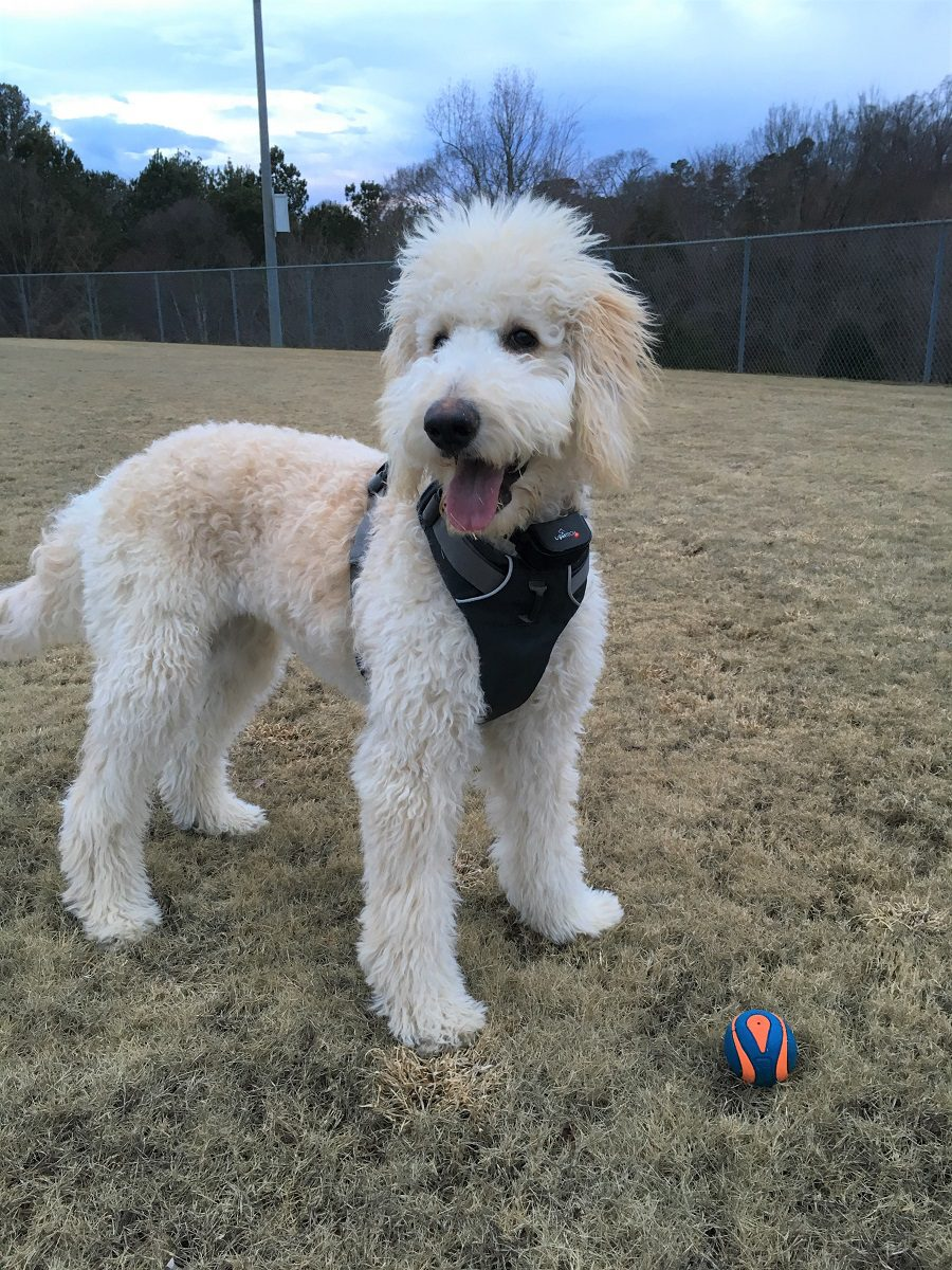 #taterthedoodle