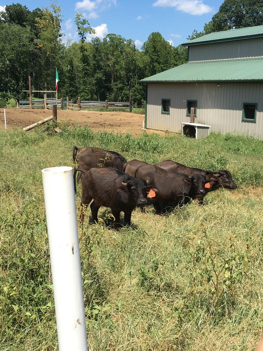 NC Farm Tour