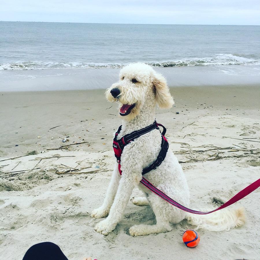 Beachy weekend