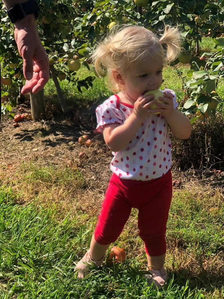 Toddler holding apple in apple orchard | Bucket List Tummy