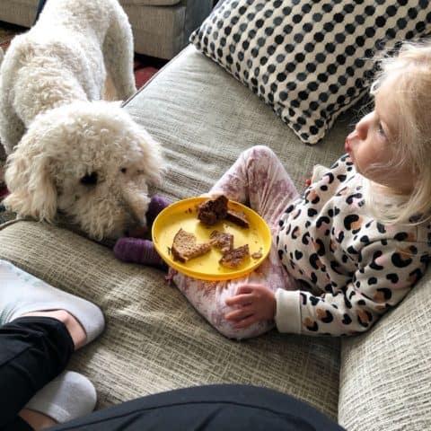 toddler and dog begging for food