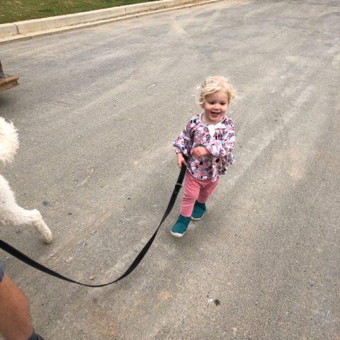 toddler walking the dog