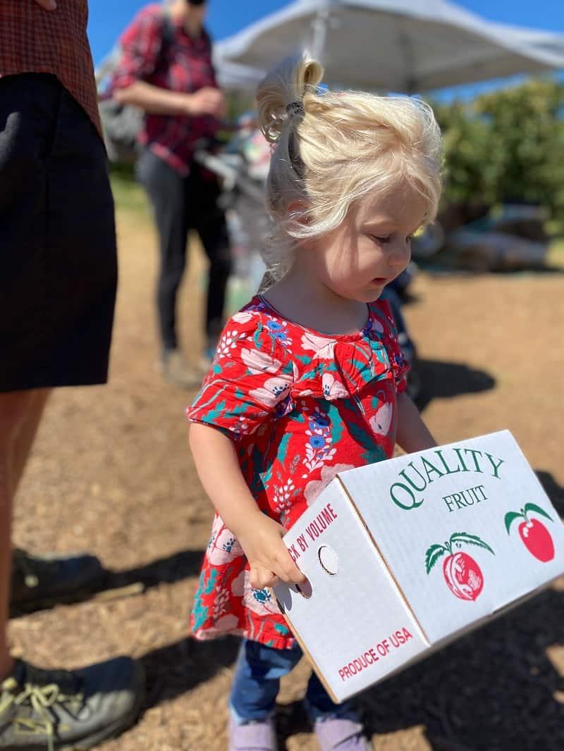 toddler holding white box for apple picking